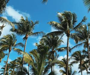 beach, palms, and vacation image