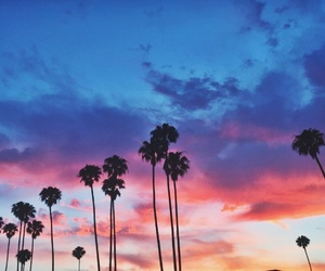 palm, paradise, and summer image