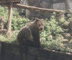 animal, el salvador, and zoo image