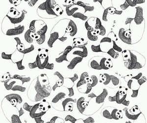 panda, animal, and black image