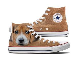 converse and dogs image