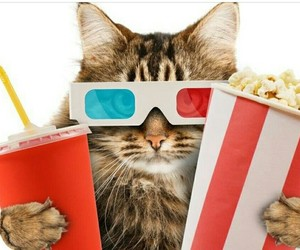 animal, cats, and funny image