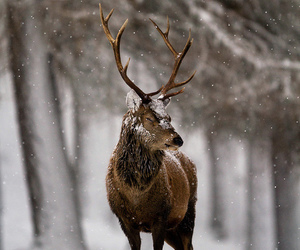 deer and snow image