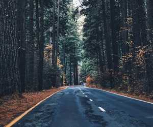fall, road, and tree image
