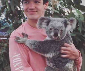 aaron carpenter, magcon, and Koala image