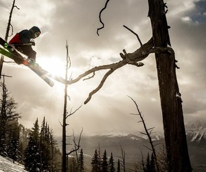 forest, ski, and winter image