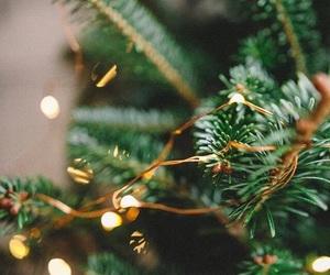 winter, christmas tree, and lights image