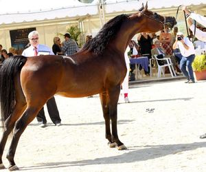 beautiful, horse, and cheval image