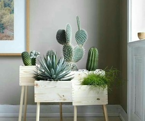 cactus, deco, and style image