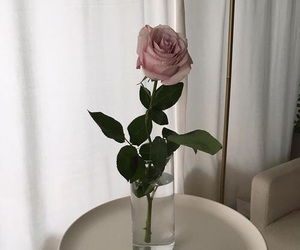 pale and rose image