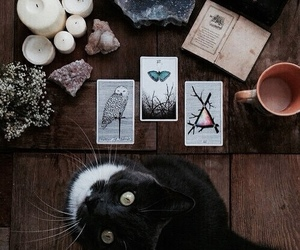 cat, magic, and witch image