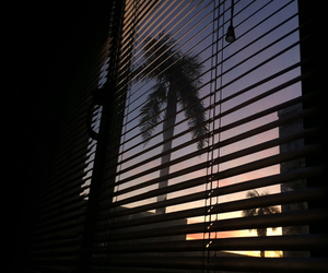 palm trees, window, and sky image