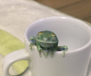 coffee, happy, and froggy image
