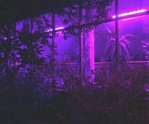 aesthetic, neon, and beautiful image