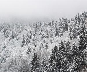 explore, fog, and foggy image