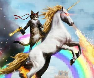 cat, unicorn, and rainbow image