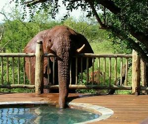 elephant, funny, and animal image