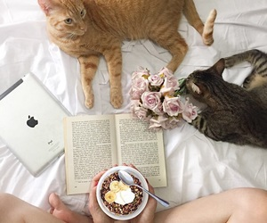 cats, morning, and flatlay image