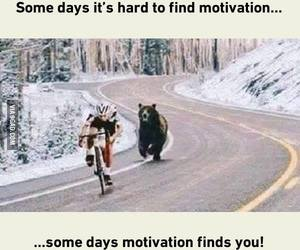 motivation, bear, and funny image