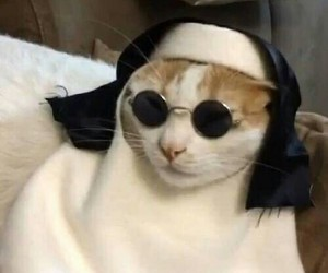 cat, funny, and nun image