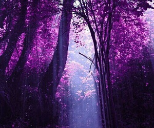 forest, purple, and violet image