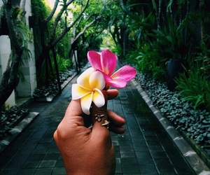 flowers, summer, and tropical image