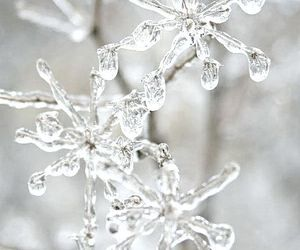 winter, christmas, and ice image
