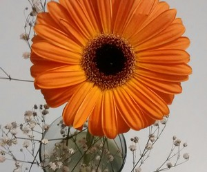 flowers, lovely, and orange image