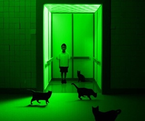 cat, green, and boy image