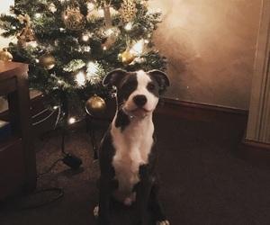 christmas, christmas dog, and christmas tree image