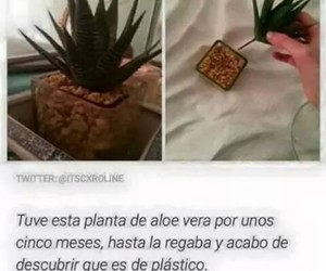 divertido, funny, and plantas image