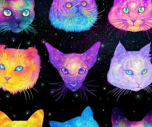cat, galaxy, and wallpaper image