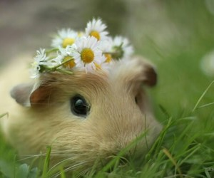 cute, animal, and flowers image
