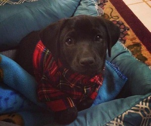 dog, cute, and flannel image