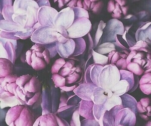 💜 and 🌷 image