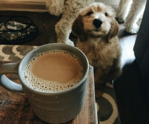 dog, coffee, and fall image
