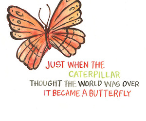 butterfly, quote, and caterpillar image