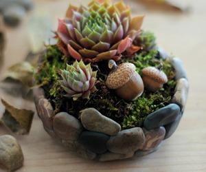 diy, plant, and pot image