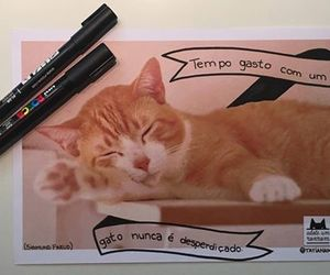 cats, frase, and gato image