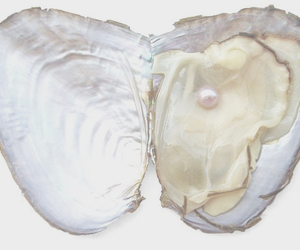 pearl and shell image