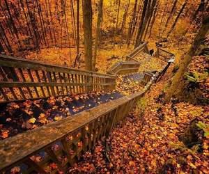 autumn, nature, and fall image