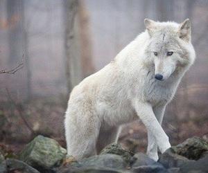 animal, nature, and beautiful image
