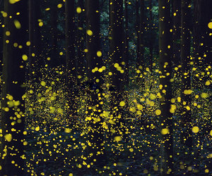 fireflies, firefly, and forest image