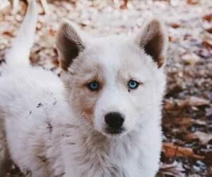 puppy, animal, and dog image