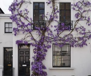 purple, flowers, and house image