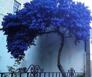 blue, tree, and flowers image