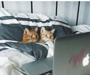 bed, goals, and kittens image
