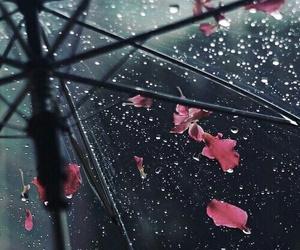 rain, flowers, and umbrella image