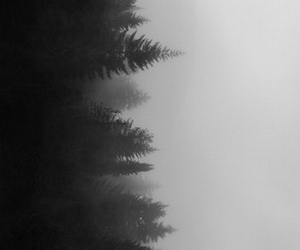 tree, black and white, and forest image