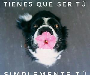amor, flor, and frases image
